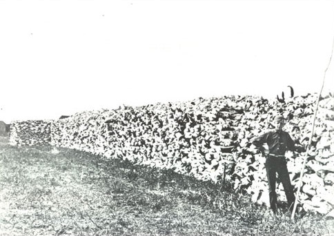 A_pile_of_buffalo_bones_stacked_for_shipment_to_Saskatoon,_young_man_posed_in_front